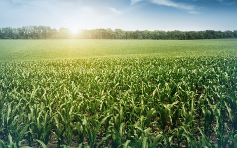 The Art and Science of Investing in Farmland